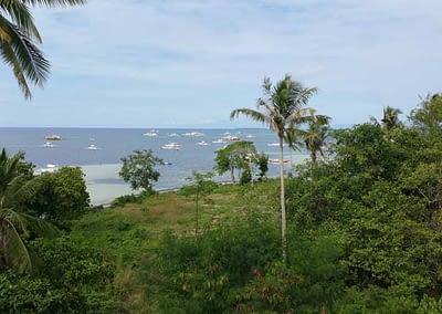 Letzter Blick auf den Tropenwald