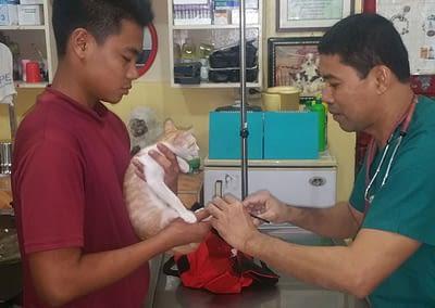 Tierarzt Dumaguete