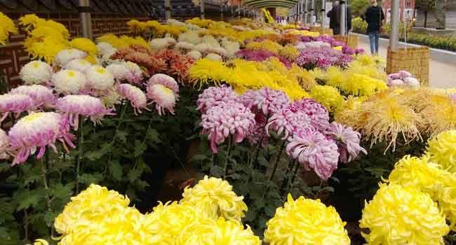 Fröhliche Farben auf dem Blumenmarkt.