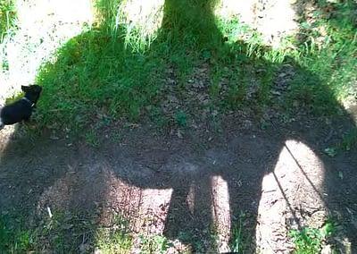 Schattenbild Hund und Pferd