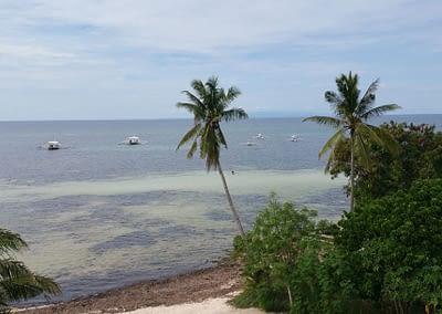 Blick auf Meer und Palmen