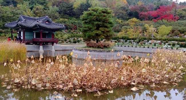 Wolmi-Park im Herbst.