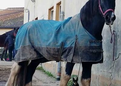 Pferd und Hund vorm Ausritt