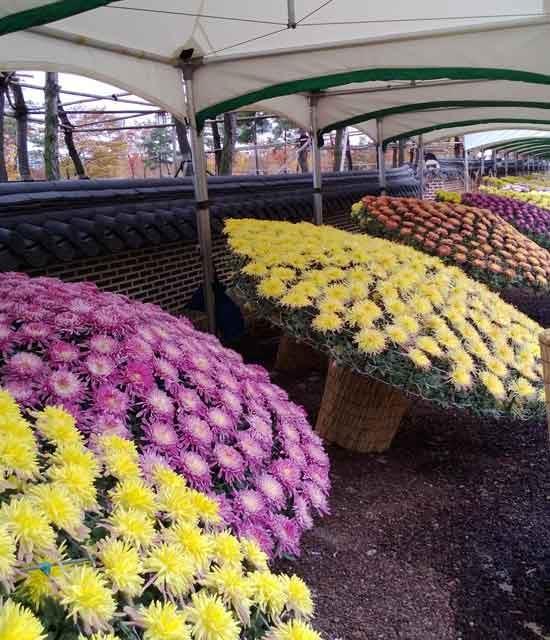Blumenmarkt.